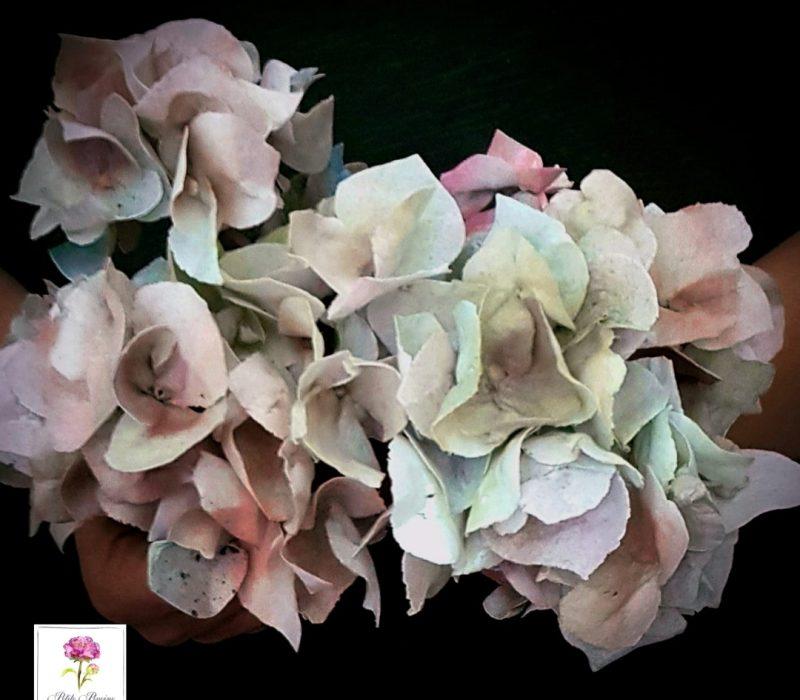 AkademiaTortu-Beata_Tomasiewicz-Wafer_paper_rose-hydrangea-pansy-sq-5